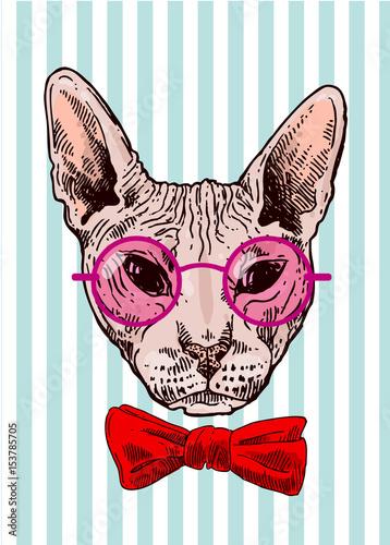 Plakat na zamówienie Portret śmiesznego łysego kota