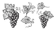 Set Of Grapes Monochrome Sketc...