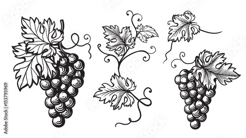 Set of grapes monochrome sketch. Hand drawn grape bunches. Fototapet