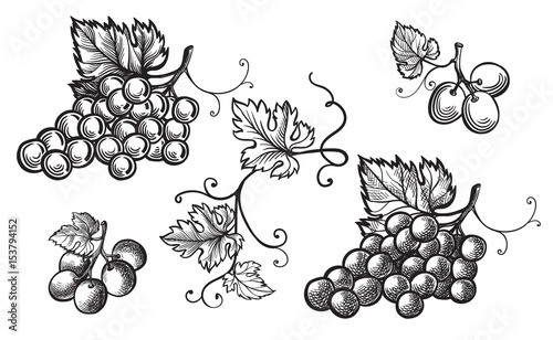 Photo Set of grapes monochrome sketch. Hand drawn grape bunches.