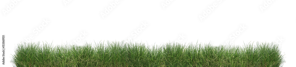 Fototapety, obrazy: Green grass isolated.