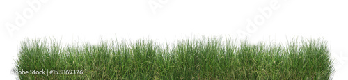 Poster de jardin Herbe Green grass isolated.