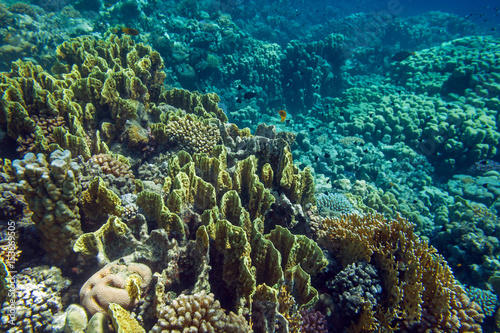 Fotobehang Onder water Bright multicolor coral reef of Red Sea lit by sun beside Marsa Alam, Egypt