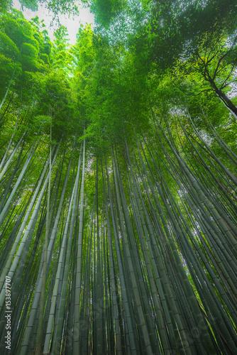 Foto op Canvas Bamboo Arashiyama in Kyoto, Japan
