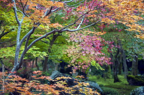 Foto op Canvas Zen Lush foliage of Japanese maple tree during autumn in a garden in Kyoto, Japan