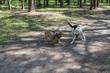 Hunde beim Spiel