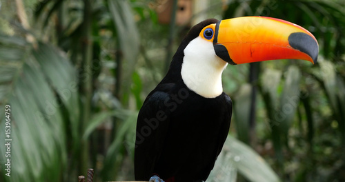 Deurstickers Toekan Toucan bird on the forest