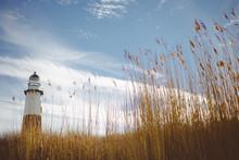 Montauk Lighthouse And Wheat G...