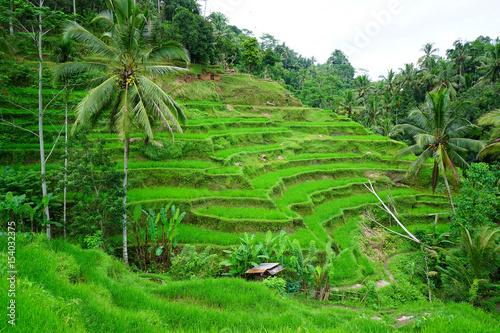 Photo Stands Bali Jatiluwih rice terrace in Tabanan, Bali, Indonesia.