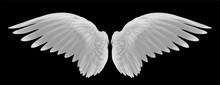 White Wings Of Bird On Black B...