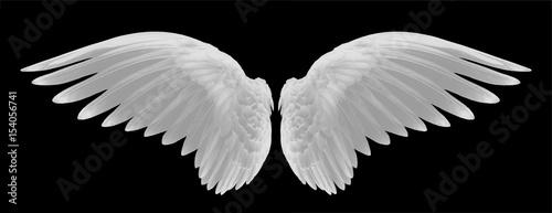 Fotografija white wings of bird on black background