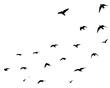 Flying birds silhouettes on white background. Vector illustration. isolated bird flying.