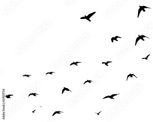 Staande foto Vogel Flying birds silhouettes on white background. Vector illustration. isolated bird flying.