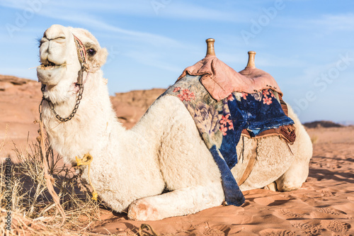 Camel sitting on sand dune with saddle against blue sky
