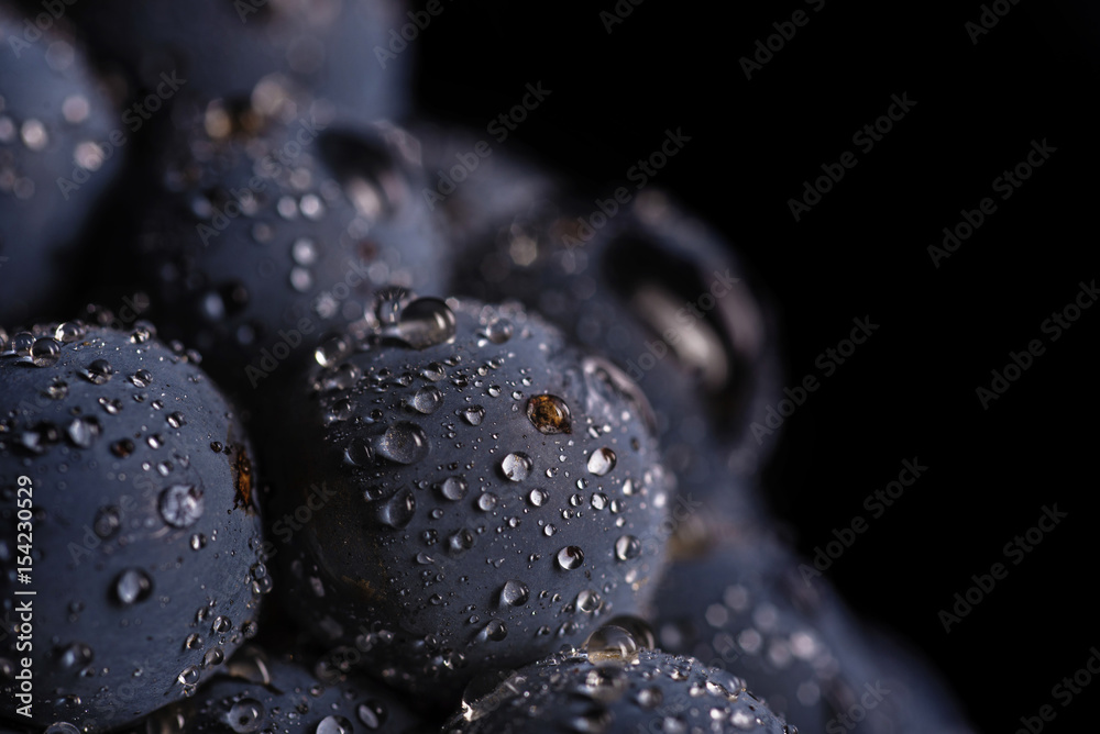 Fototapety, obrazy: Dark bunch of grape in low light on black isolated background , macro shot , water drops