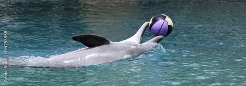 Plakat Dolphin Odtwarza z koszykówki na powierzchni