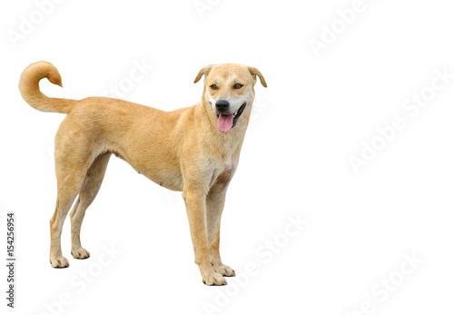 Foto  dog isolated on white background