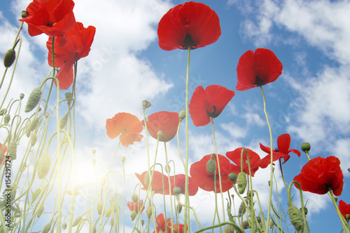 Foto op Canvas Klaprozen Poppies and sun