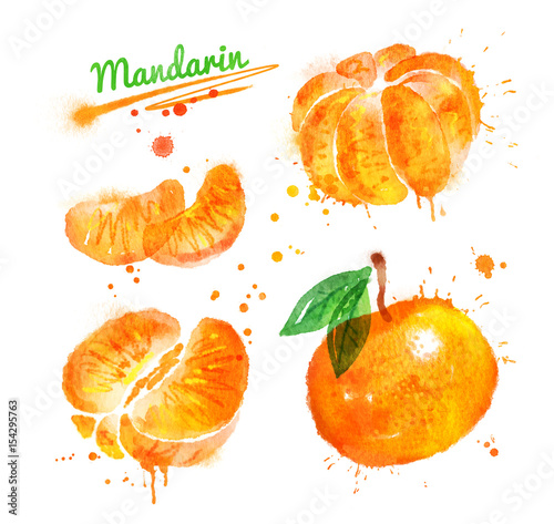 Watercolor illustration of mandarin