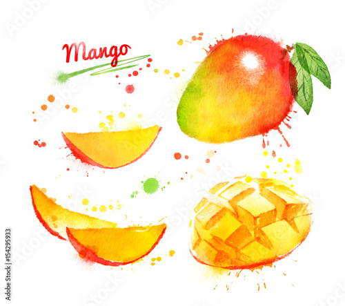 Watercolor illustration of mango