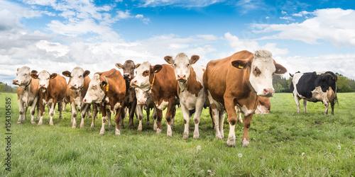 Deurstickers Koe Kuhherde auf einer Weide im Unteralläu - Bayern