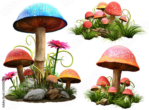 Fototapeta  Mushrooms
