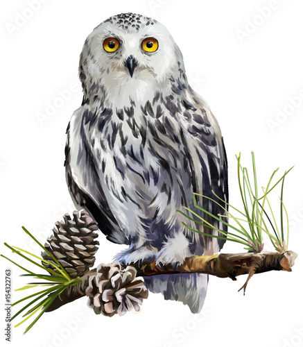 Photo Stands Owls cartoon Snowy owl sitting on a branch