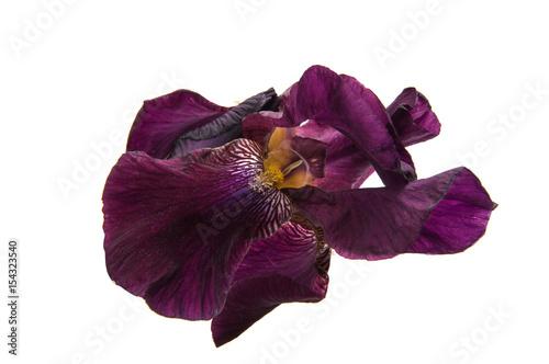 Papiers peints Pansies iris isolated