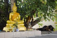 Thai Vagabond People Sleeping On Floor Under Ficus Religiosa Or Sacred Fig Tree With Buddha Statue