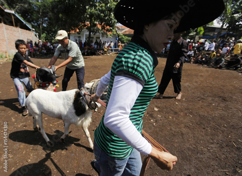Domba Garut Breeder Euis Komariah Holds Her Ram By The Horns After A