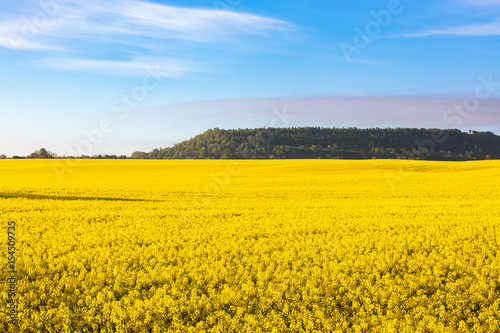 Foto op Aluminium Oranje Flowering rape fields in rural landscape