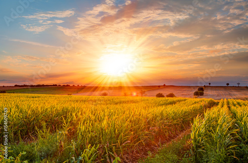 Canvas Prints Culture Corn field at sunset