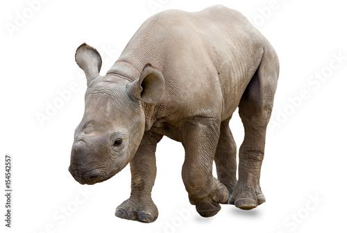 Spoed Foto op Canvas Neushoorn Baby rhinoceros on white