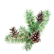 The Branch Of Fir Tree With Co...