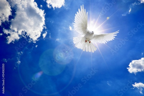 VLIES Fototapete-WEIßE TAUBEN- 491 -Vögel Tiere Himmel Wolken Natur Landschaft