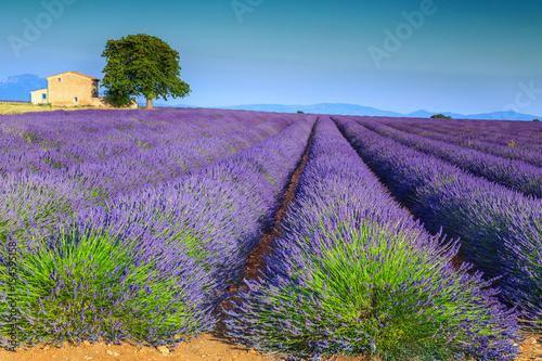 kolorowi-purpurowi-lawend-pola-w-provence-regionie-valensole-francja-europa