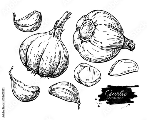 Fotografía  Garlic hand drawn vector illustration set. Isolated Vegetable, c