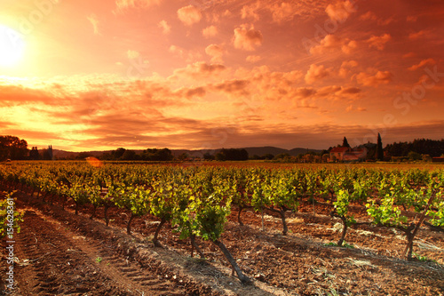 Foto op Plexiglas Zuid Afrika Amazing Vineyard Sunset
