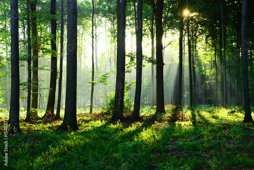 Papiers peints Forets Morning in the forest