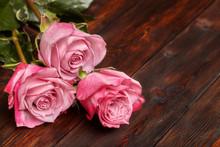 Three Beautiful Pink Roses On ...