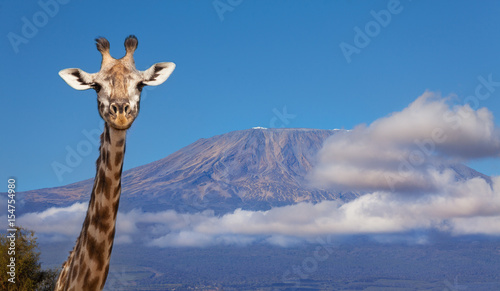 Fotobehang Giraffe Portrait of giraffe head against Kilimanjaro mount