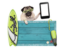 Pug Dog On Vacation With Blue ...