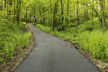 Bike & Hiking Trail In Spring