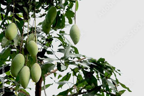 Fotografía  Mango fruits