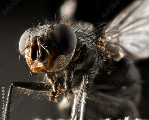 Foto op Canvas Textures Fly extreme macro