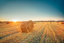 Rural Landscape Field Meadow W...