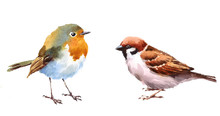 Robin And Sparrow Two Birds Watercolor Hand Painted Illustration Set Isolated On White Background