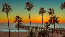 Palm Trees At Manhattan Beach At Sunset. Fashion Travel And Tropical Beach Concept.