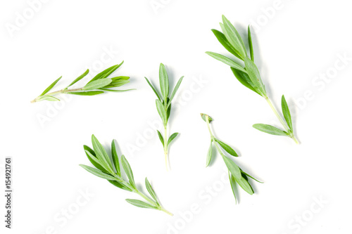 Fotografía  Sprig of fresh thyme isolated on a white background