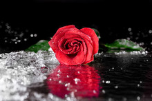 One Red Rose With Water Drops Lying On Black With Reflection